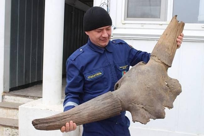 В Волгограде на дне реки нашли череп доисторического буйвола